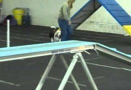 Duke the Deaf Basset Loving Dog Agility