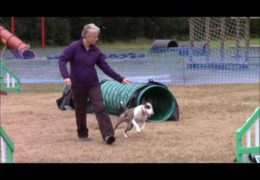 Magnus & Beattie Two Amazing Dog Agility Competitors