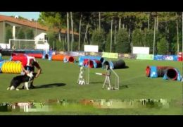 Amazing Dog Agility Tunnel Cup Run