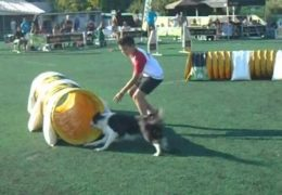 Youth Handler Masters Dog Agility Tunnel Cup