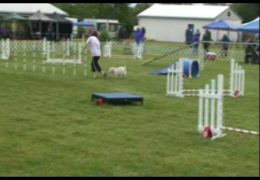 Barclay Falls Victim to Dog Agility Zoomies