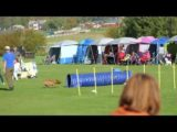 These Staffordshire Bull Terrier Love Dog Agility