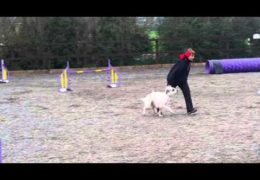 Sudden Onset Zoomies Take Another Dog Agility Team