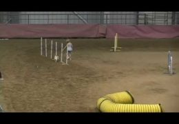 Youth Handler Morgan's Amazing AKC Dog Agility Run