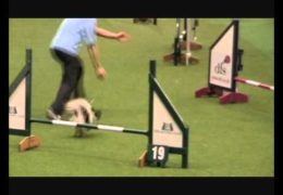 Caeyn Crushes the 2011 Crufts Debut