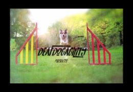 Dog Agility Channel Weaves Training