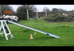 Amazing Dog Agility Running Contacts