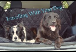 Help Making Travel with your Dog Safe and Enjoyable