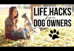 Dog Owner Life Hacks That Really Help