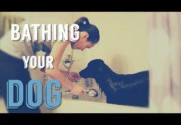 Making Bath-time More Enjoyable for Your Dog