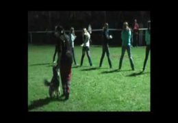 Dog Agility Competition with Human Obstacles