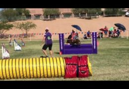 Importance of Knowing Your Agility Dog