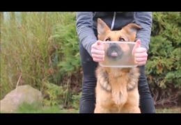 Amazing Dog Tricks by 3yr old German Shepherd Britney