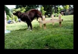 Advancing Rear End Awareness for Your Agility Dog