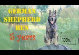 Brilliant Dog Tricks by 5yr old German Shepherd Ben