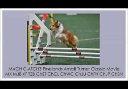 From OCD to Dog Agility Champion