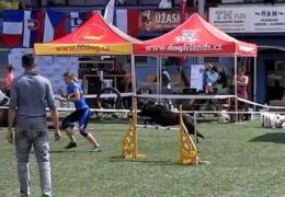 Vigi and Jana Zvonková's Beautiful Dog Agility Run