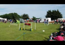 Amazing Winning Dog Agility Run by Pippy