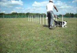 Incredible Weave Pole Proofing