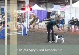 Spry is Just That at his Novice Dog Agility Debut