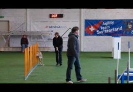 Podenco Nubia Love, Love, Loving Dog Agility