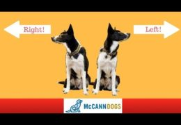 Teach Your Agility Dog Left and Right on Command