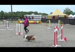 Common Dog Agility Handling Mistakes