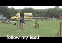 Distance Handling for Dog Agility with Philippa