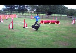 Super Dog Agility Beginner Steeplechase Win