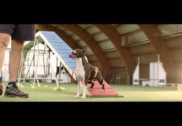 Stunning Promo for 4 Paws Dog Agility Event