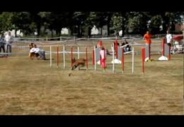 Enola and Vérity Beyond Amazing Dog Agility Run