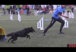 Roberto Rondoni Creates a Solid Dog Agility Run
