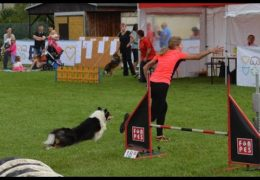 Nessie is Amazing at Dog Agility