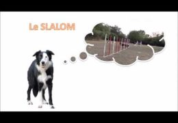 More Great Dog Agility Weave Proofing Ideas