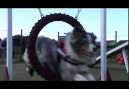 This Dog Agility Group is Having Fun