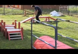 Is this Course Safe for an Agility Puppy