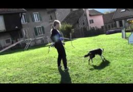 Brilliant Example of 2 by 2 Dog Agility Weaves Training