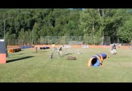 Dog Agility with a Dog Named Fish