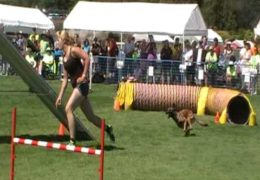 This Rabbit wins the 2012 AAC Steeplechase Nationals