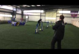 This Little Aussie Excels in Dog Agility