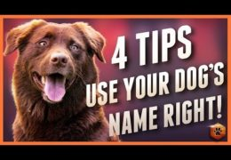How to Keep Value in Your Agility Dog's Name