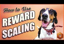 How to Use Reward Scaling with Dog Agility Training