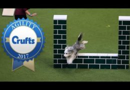 The Fastest Agility Dogs at 2017 Crufts