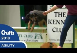 The Amazing Rescue Dog Agility at Crufts 2018