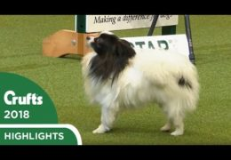 Tink Says No Way at Crufts 2018 Dog Agility