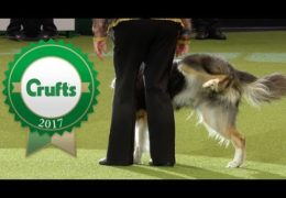 2017 Crufts Dog Agility Bloopers