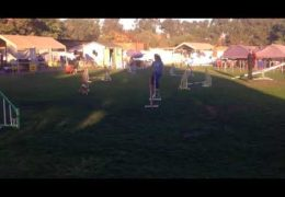 Team Q Excels in Dog Agility Relay