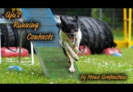 Dog Agility Running Contacts Explained by Mona