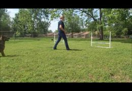 Teaching Push and Pull for Dog Agility