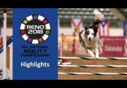 2018 AKC National Dog Agility a Blast